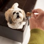 The Vitamins for Dogs You Should Consider