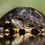 All About Turtles and What They Can Eat