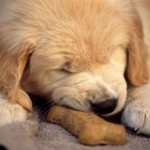 Finding the Best Dog Food for Puppies