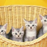 Learning the Basics of Caring for Kittens