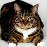 Knowing the Common Cat Health Symptoms
