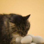 Learn About Proper Cat Nutrition