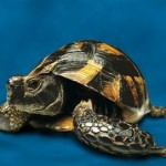 Different Types of Turtles That You Can Bring Home