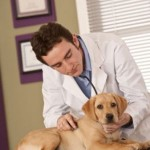The Importance of Dog Health Care