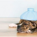 Dog Health Symptoms