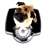 The Best Method for Dog Weight Loss