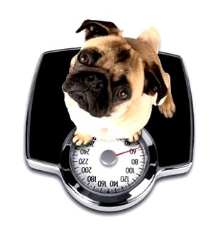 Best Dog Food To Help Dog Lose Weight