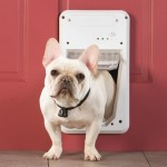 Do You Need an Electronic Pet Door?