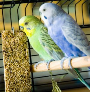 Luxury Pet Birds