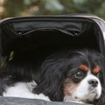 Use Your Motorcycle Pet Carrier on the Road