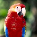 Take a Look at Different Parrot Species