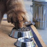 The Numerous Perks of an Automatic Pet Feeder