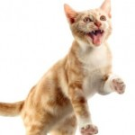 How to Deal with Cat Behavior Problems?