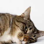 Catch Cat Illness Symptoms Before They Turn into Something Worse