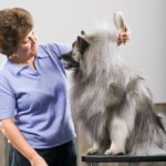 Learning the Basics of Dog Grooming Equipment