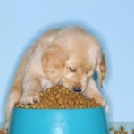 Learning the Importance of Dog Nutrition