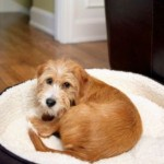 Finding the Perfect Dog Beds for Small Dogs