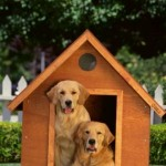 How to Find the Top Dog Boarding Kennels