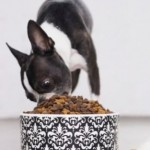 What You Need to Know About Dog Food Allergies