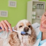 You Need to Understand the Importance of Dog Teeth Cleaning