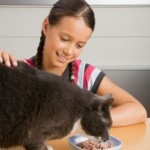Save Some Time and Money with Homemade Cat Food