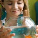 How to Care for Saltwater Aquarium Fish