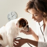 What Are the 10 Most Common Dog Diseases