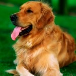 What Are the Different Types of Dogs for Kids