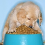 6 Dog Nutrition Facts for Your Canine Friend