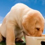 How to Choose the Best Puppy Food
