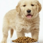 What Are the 6 Most Common Dog Food Allergies