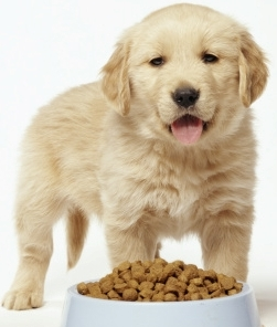 6 Most Common Dog Food Allergies