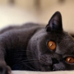 Cat Flu Symptoms and Treatment