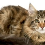 Most Common Cat Illness Symptoms
