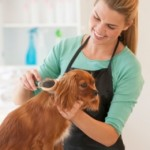 Natural Flea and Tick Treatment for Dogs