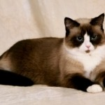 10 Symptoms of Kidney Disease in Cats