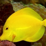 What Are the Types of Tropical Fish Diseases