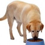 What Is a Natural Dog Diet?