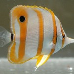 Different Types of Saltwater Aquarium Fish