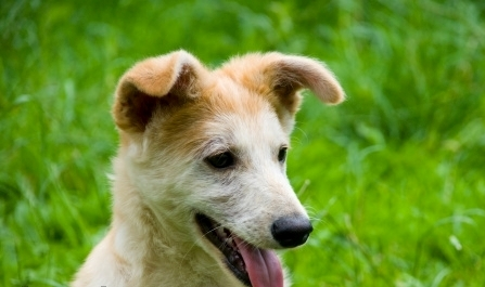 Home Remedies for Eye Problems in Dogs