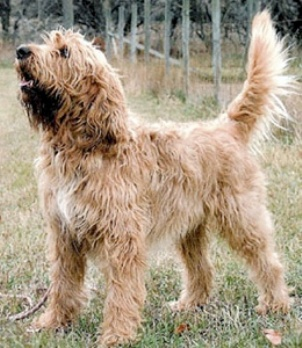 Top 10 Rare Dog Breeds The Pets Central