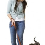 Training Tips for Chocolate Lab Puppies