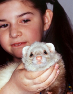 Facts about Ferrets as Pets