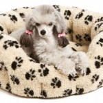 30 Unique and Modern Pet Beds