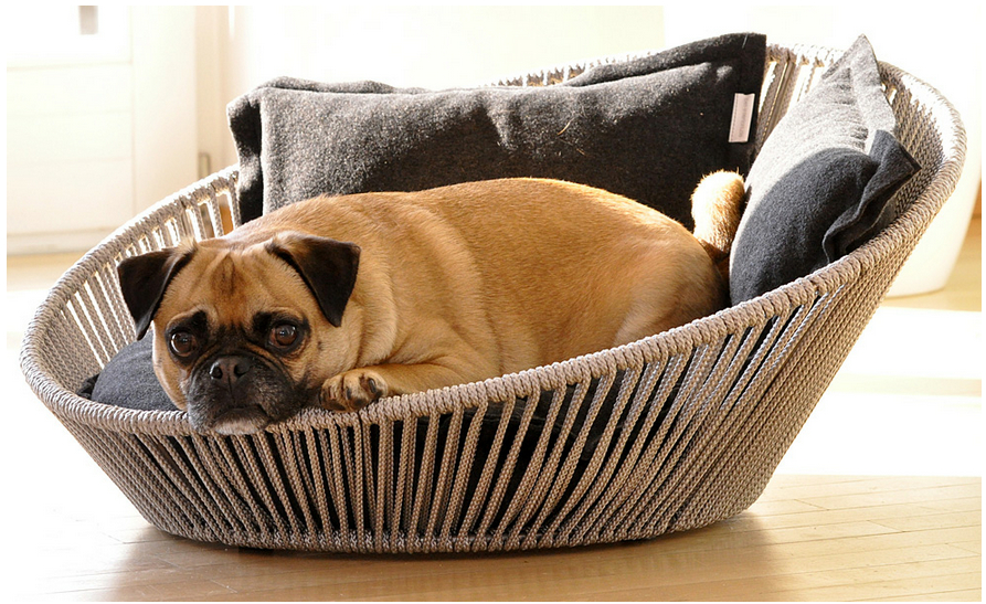 30 Unique And Modern Pet Beds The Pets Central