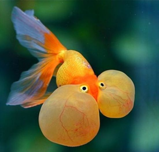 50 best tropical fishes for your aquarium the pets central for Best pet fish