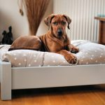30-Unique-and-Modern-Pet-Beds