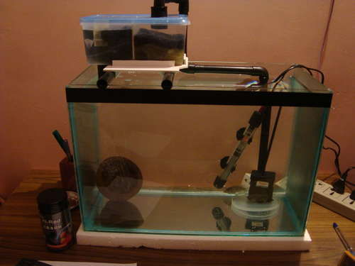 Aquarium Filters for Large Tanks