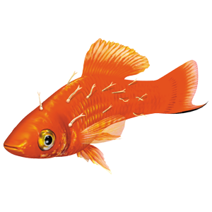 Some major aquarium fish diseases and their symptoms the for Worms in freshwater fish