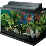 cold water aquarium